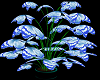 blue butterfly plant