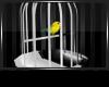 [V]Birdie