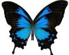 SM Butterfly decor Blu