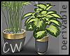 Plant 01