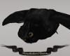 Dark Dead Owl