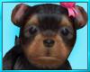 Terrier Puppy Dog
