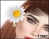 🌼 Daisy Flower