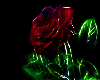 The Neon Rose