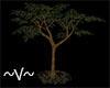 ~V~ Medium Tree