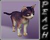 ~SP Cuddle Kitty~