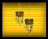 [Bee] Hanging Plants