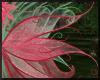 Coral Sage Wings