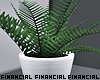 Minimalist Fern Plant
