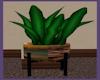 ~SD~ EXADYSIS PLANT