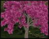 Blossoms Tree