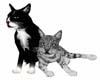 ~S~  Animate Cute Kittys