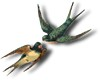 1birds 2
