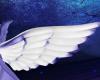 Angel Small Wings