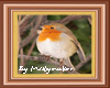 Robin framed picture