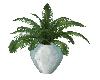 (V) plant 2