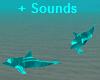 NLG-Dolphins Aqua