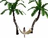 tropical hammock