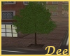 City Street Tree