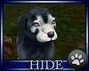 [H] pup - Tejas