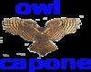 owl capone