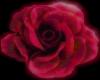 Pink Large Rose 2