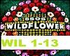 Wildflower - 5SOS