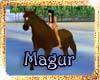 !(MAG)A HORSE BALSAK