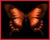 Jr Red monarch