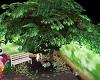 EASTER BARN TREE mcw