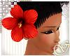G- Caribbean Hibiscus H.