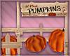 t• Pumpkin Patch