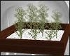 [S] modena lucky bamboo