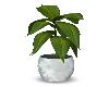 (V) Plant 1