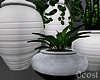 Interior Potted Plants