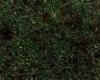 Forest grass carpet