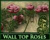 Wall Top Roses