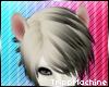 Marked White Ferret Ears