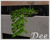 Wall Plant