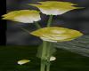 YellowtoWhite Rose
