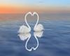 White Swans Love
