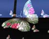 [QmR] Butterfly