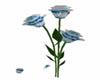 Animated Blue/white Rose