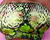 snake Musubi