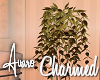 Charmed Plant & Stand