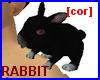 [cor] Rabbit on shoulder
