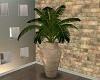 !Modern Flat Plant