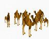Group camels