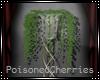 (PC) Cantrelle Ivy Plant