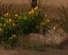 Beach Stone + Flower